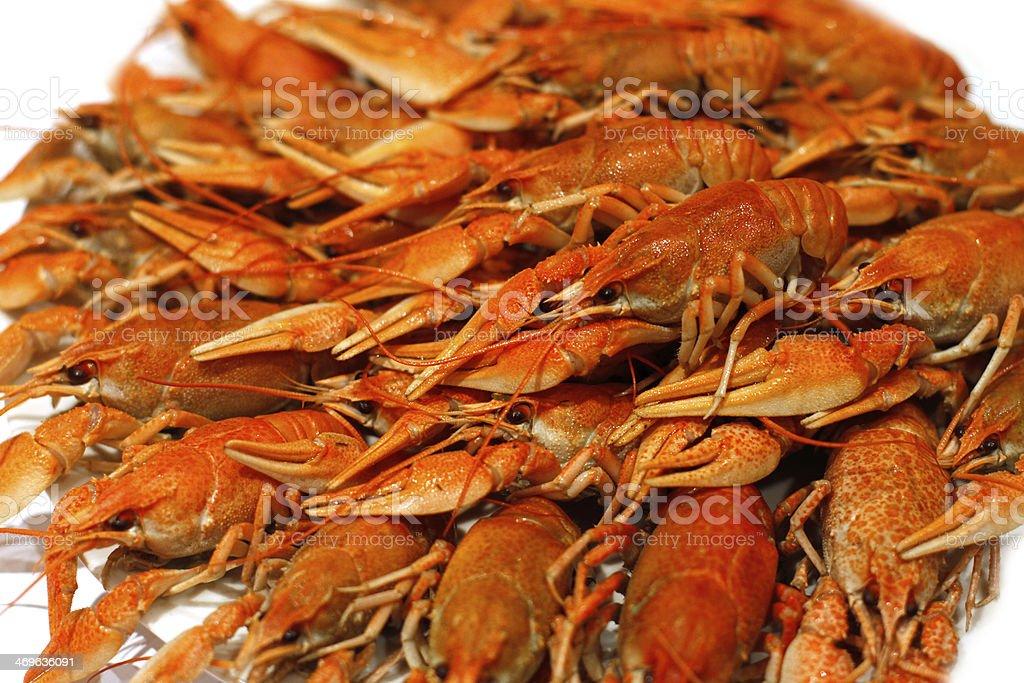 Fresh boiled crawfish royalty-free stock photo