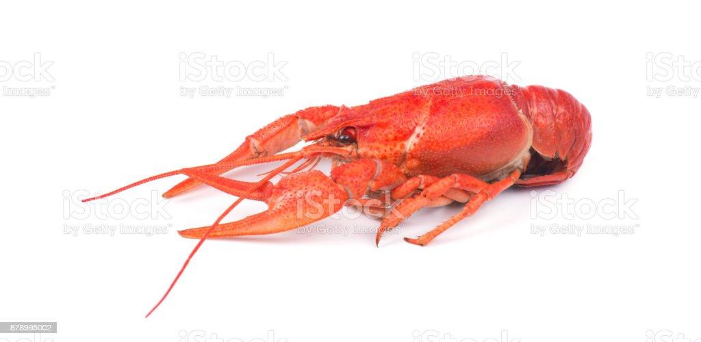 Fresh boiled red crayfish, isolated on white background. stock photo