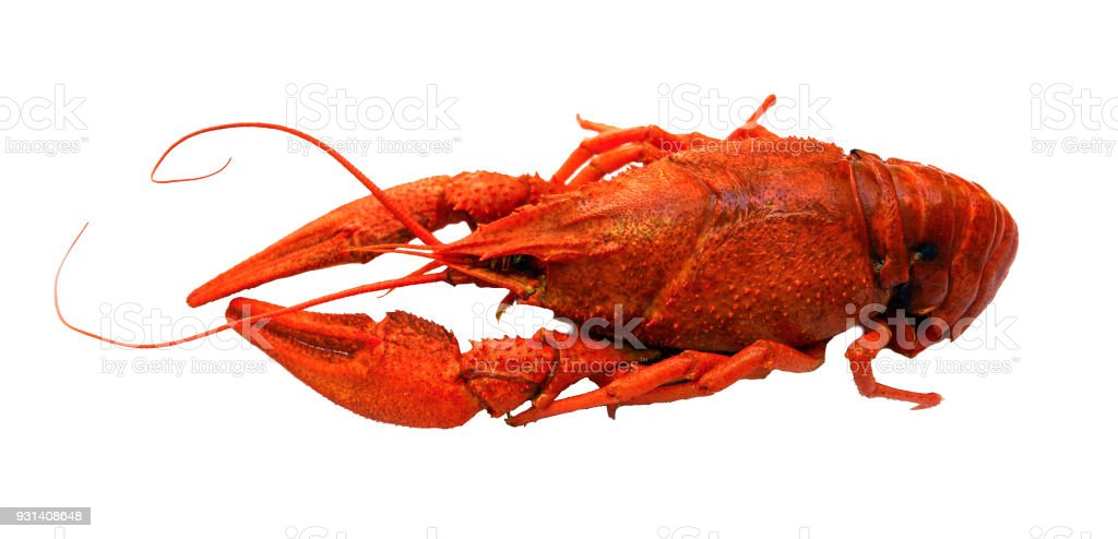 Fresh boiled red crayfish on white background. traditional russian beer snack stock photo