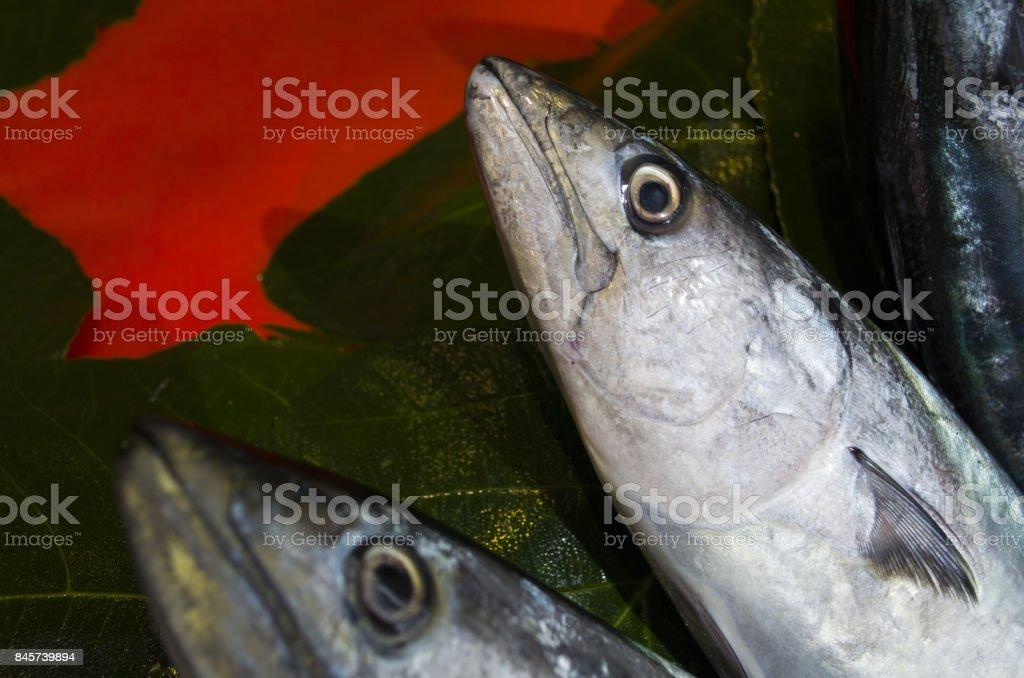 fresh bonito fish stock photo