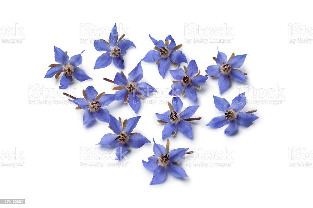 Fresh borage flowers