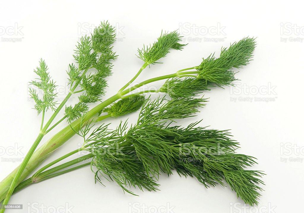 Fresh branches of green dill royalty-free stock photo