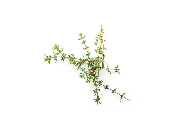 fresh branches with leaves of organic thyme seen from above isolated on a white background. - thyme stock photos and pictures