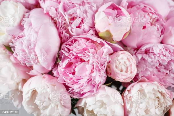 Fresh bright blooming peonies flowers with dew drops on petals white picture id849272110?b=1&k=6&m=849272110&s=612x612&h=inyr0mdaf1vbggfoleb3baenme3c9rcm8on7kdha8d8=