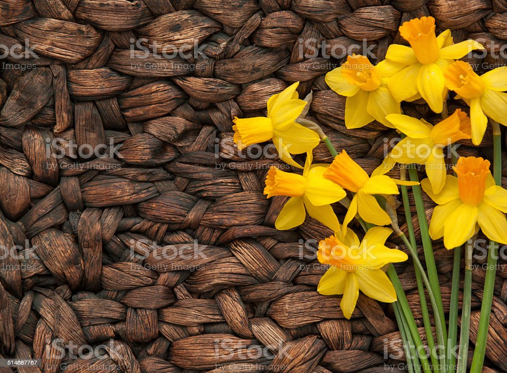 Fresh, bright Daffodils on Contrasting woven surface stock photo