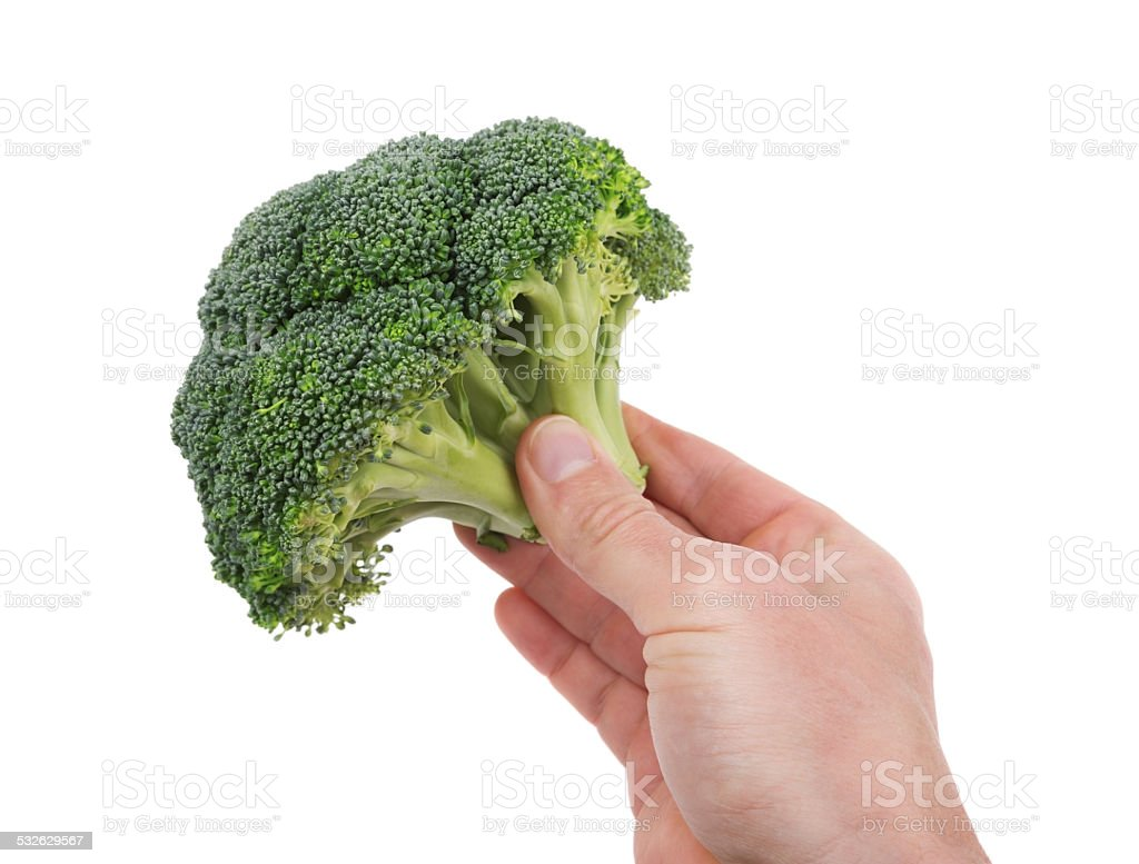 Fresh broccoli in hand for cooking. On a white background. stock photo