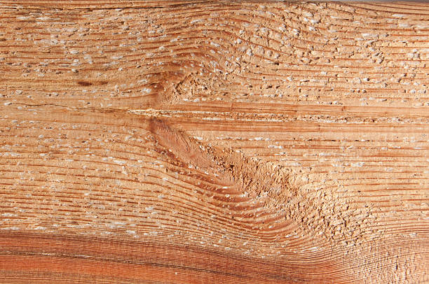 Fresh brown, larch wood board texture stock photo