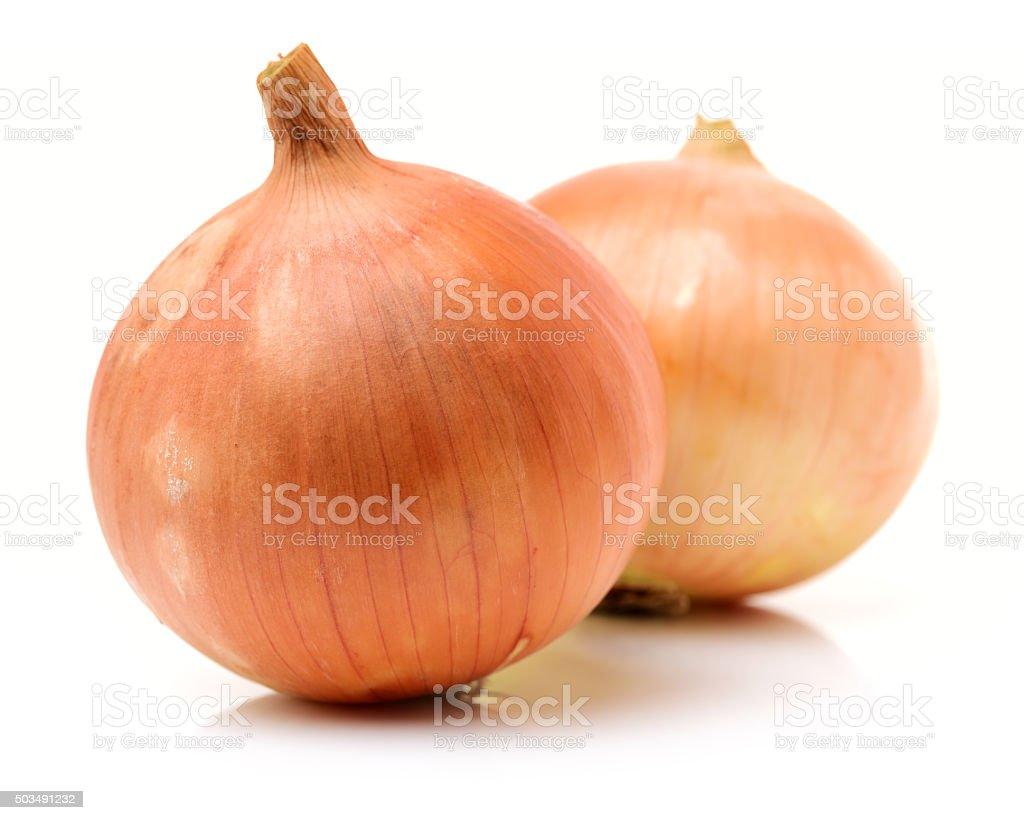 Fresh bulbs of onion stock photo