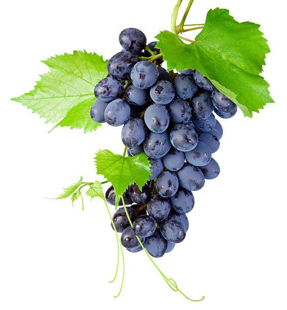 fresca racimo de uvas con hojas aisladas sobre fondo blanco - grapes fotografías e imágenes de stock
