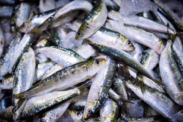 Fresh bunch of small Portuguese sardines on ice exposition at the fish market. stock photo