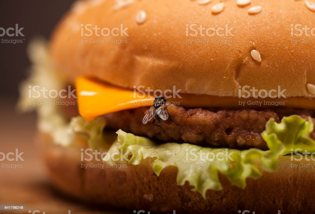 Fresh burger with fly stock photo