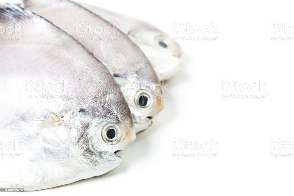 fresh butterfish on white stock photo