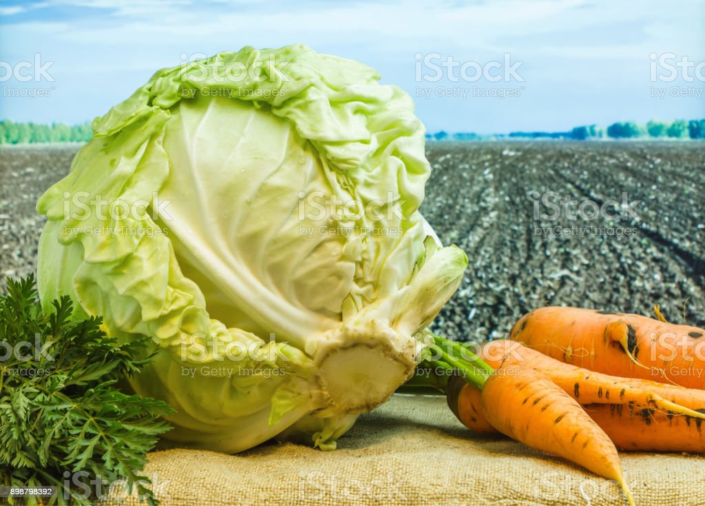 fresh cabbage and carrots stock photo