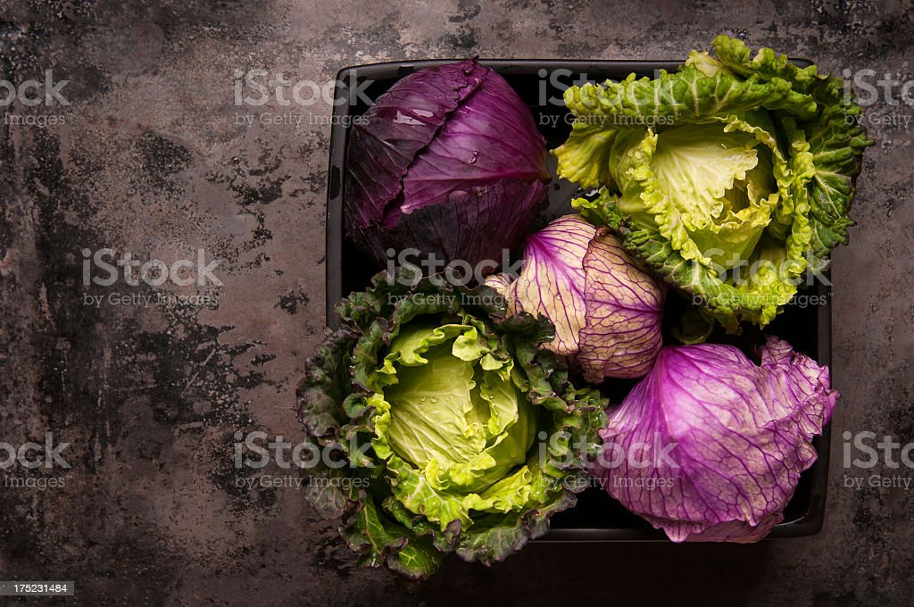 Fresh Cabbages in a Black Bowl royalty-free stock photo