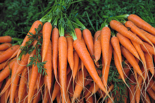 Fresh carrot bunches in open air market