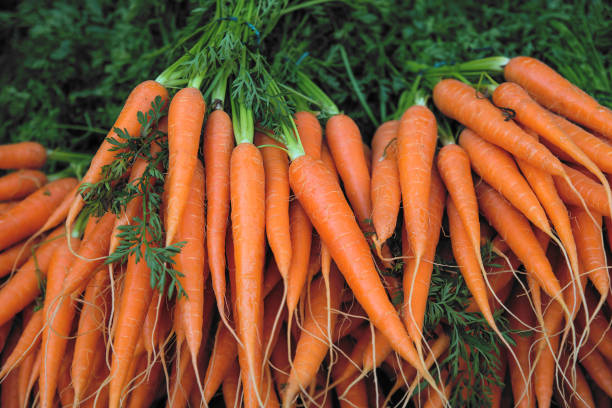 fresh carrot bunches in open air market - cenoura imagens e fotografias de stock