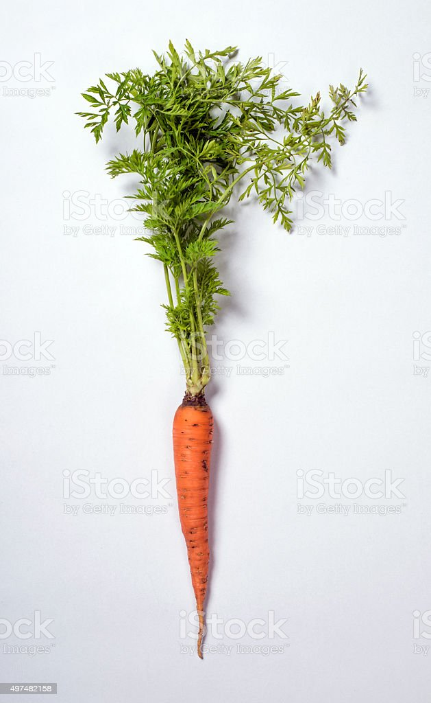 Fresh Carrot Isolated on a White Background stock photo