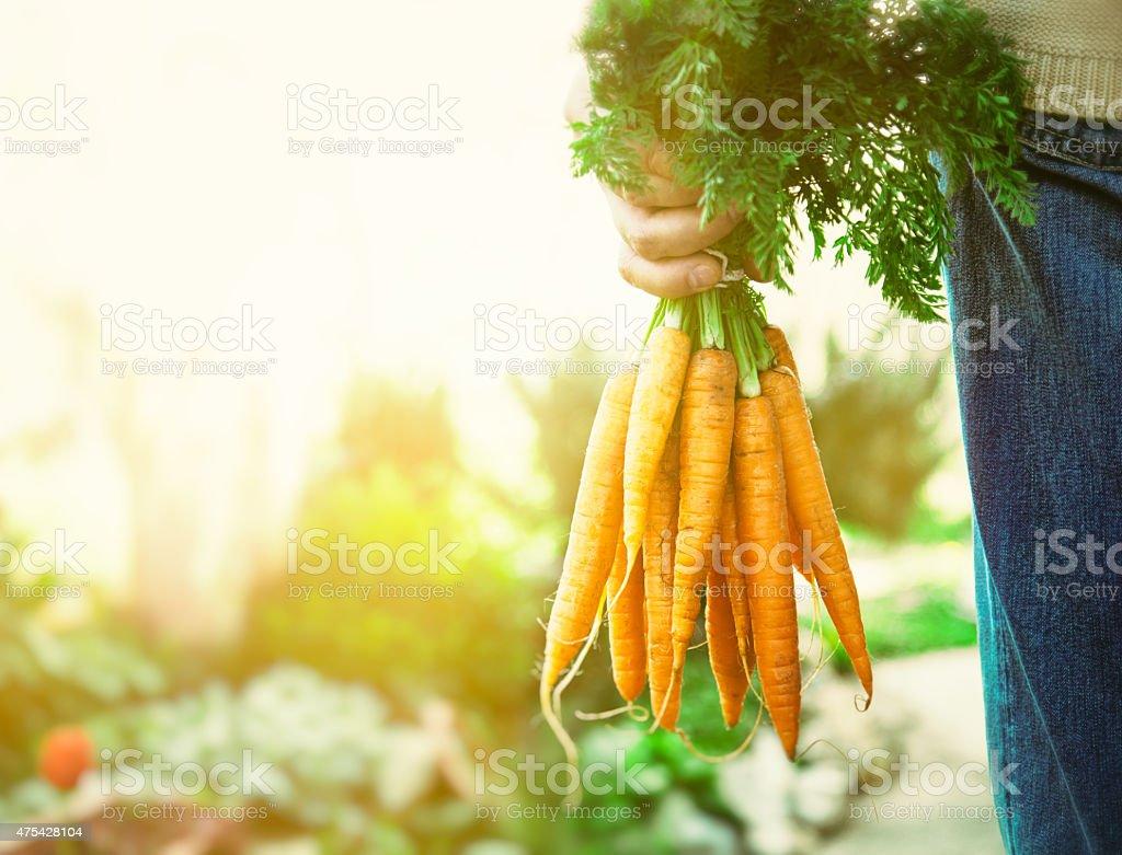 Organic vegetables. Healthy food. Fresh organic carrots in farmers...