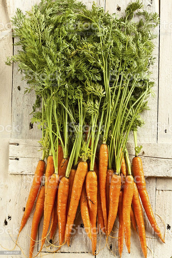Fresh carrots straight from the ground royalty-free stock photo