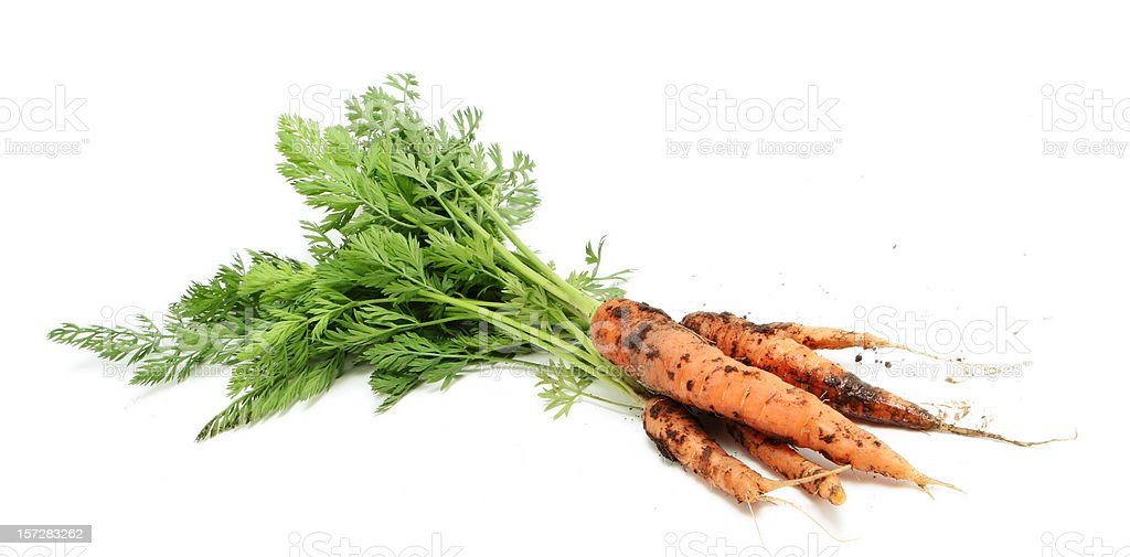 Fresh Carrots with Dirt on Them royalty-free stock photo