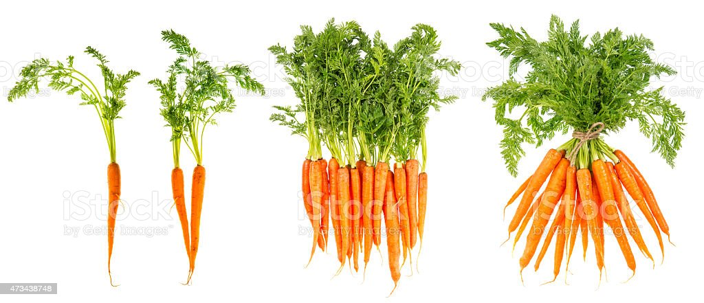 Fresh carrots with green leaves. Raw vegetable. Healthy food stock photo