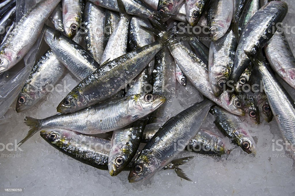 Fresh catch of fish royalty-free stock photo