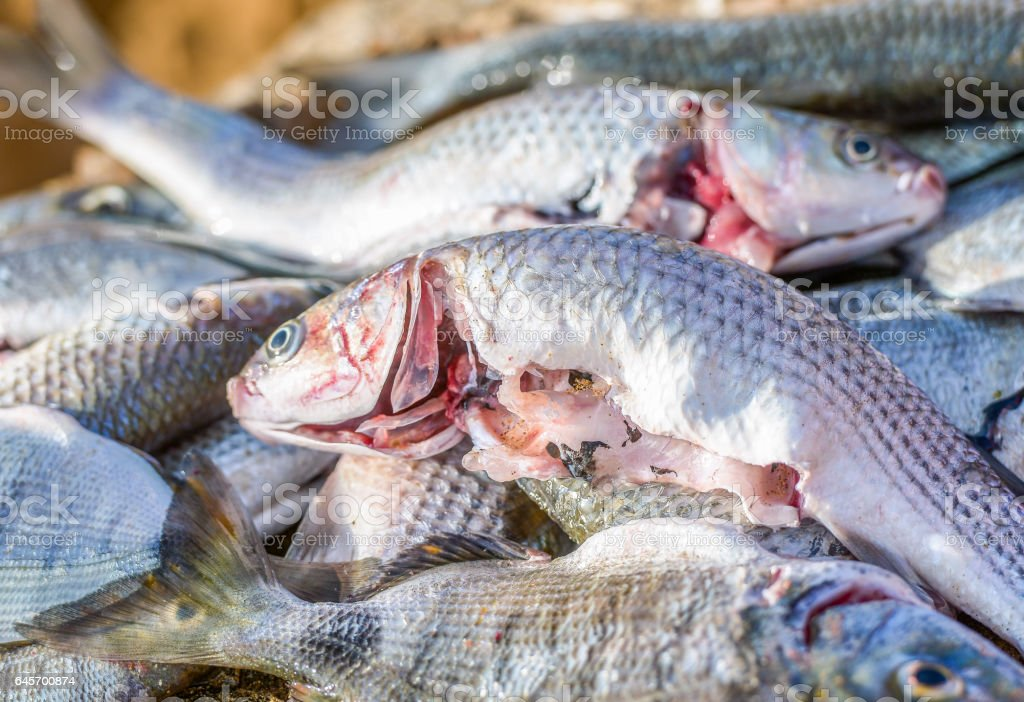 Fresh catch of fish stock photo
