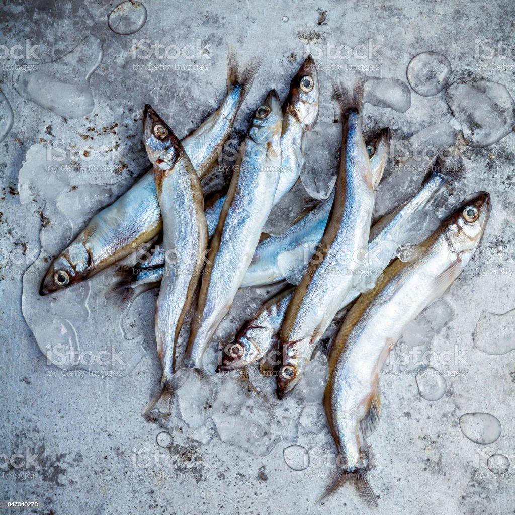 Fresh catch Shishamo fish fully eggs . Shishamo fish is popular fish for Japanese cuisine cooking Tempura. Fresh Shishamo fish tempts buyers at fresh seafoods stall. stock photo