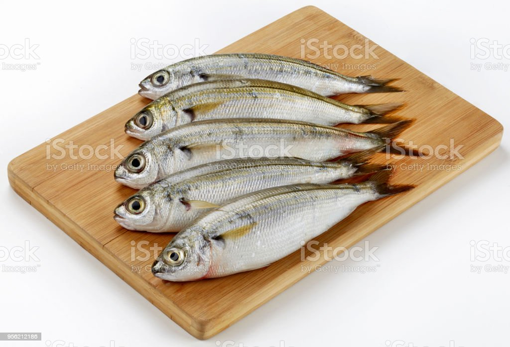 Fresh Caught Bogue Fish Or Boops Boops fish on wooden cutting board stock photo