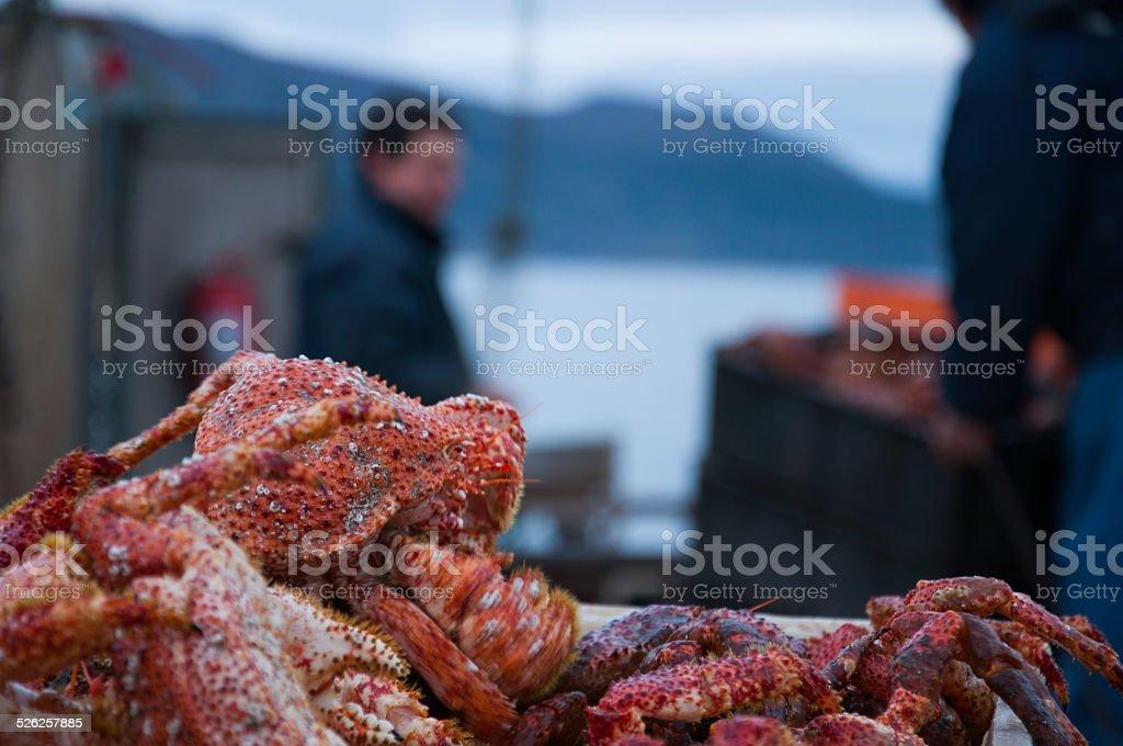 Recién salidos del cangrejo - foto de stock