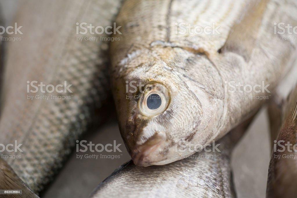 fresh caught fish on a market royalty-free stock photo