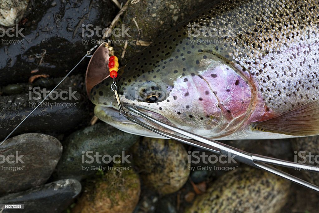 fresh caught fish royalty-free stock photo