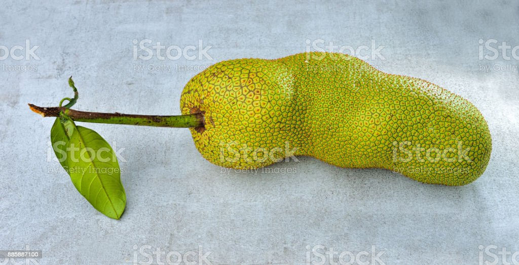Fresh cempedak fruit stock photo