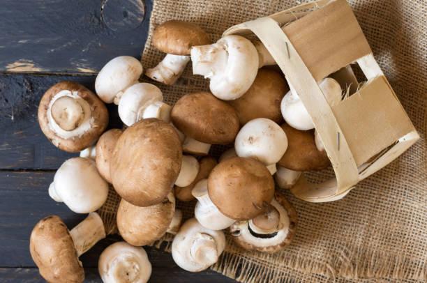 fresh champignons mushrooms. view from above. - cogumelos imagens e fotografias de stock