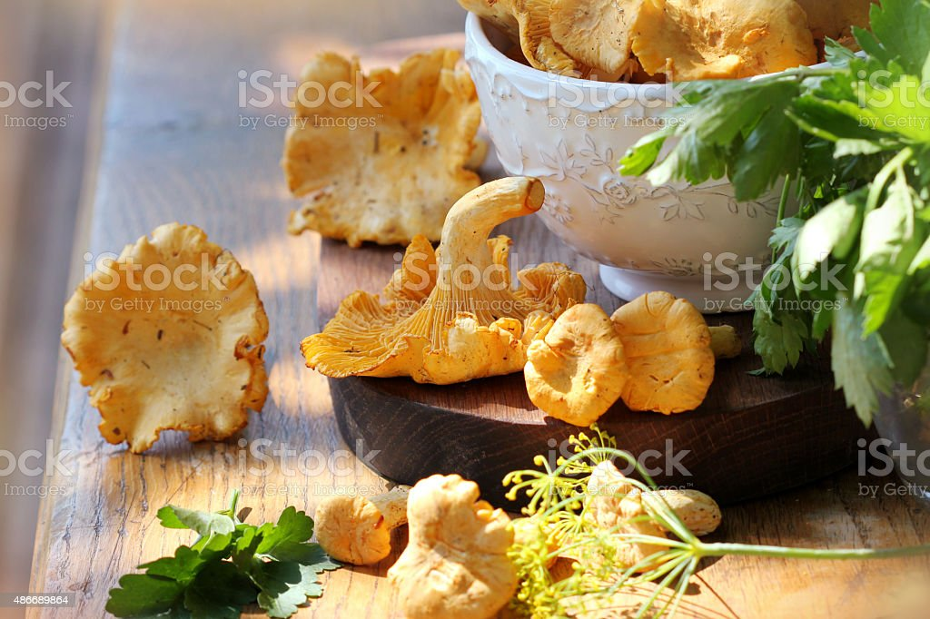 Fresh chanterelle mushrooms on a  table stock photo