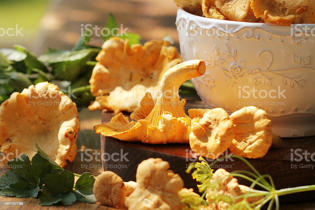 Fresh chanterelle mushrooms stock photo
