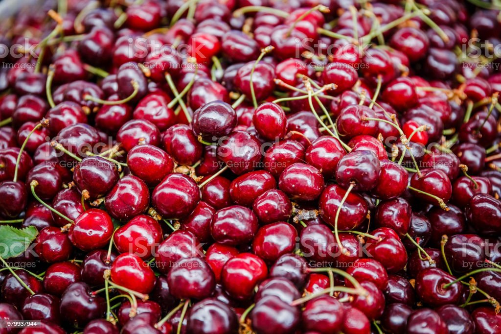 Fresh Cherries Pictures