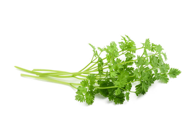 fresh chervil bunch - parsley stock photos and pictures