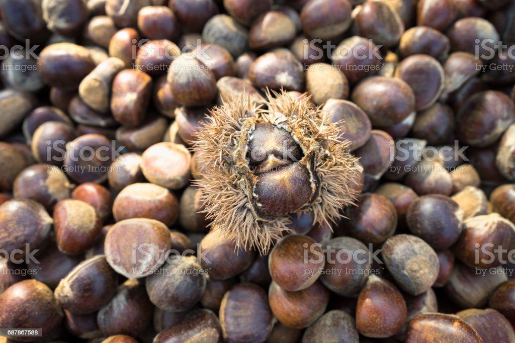 Fresh Chesnut stock photo
