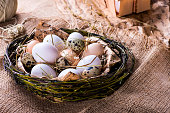 Fresh chicken and quail eggs in a nest