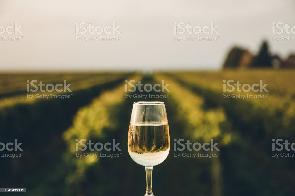 A fresh chilled glass of ice wine overlooking a Canadian vineyard during a Summer sunset A rare dessert wine produced from the juice of naturally frozen grapes that have been picked in the middle of a cold Canadian winter Agricultural Field Stock Photo