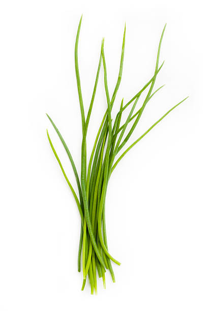 Fresh chives bunch stock photo