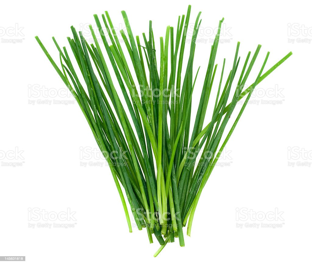 fresh chives herb royalty-free stock photo