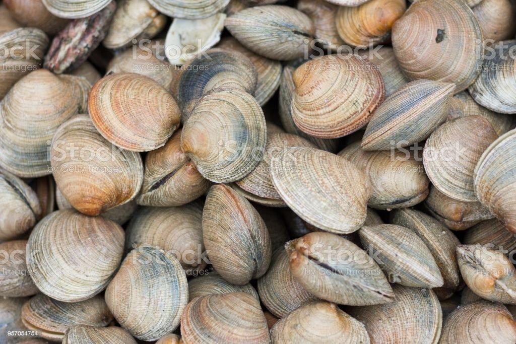 Fresh clams background stock photo
