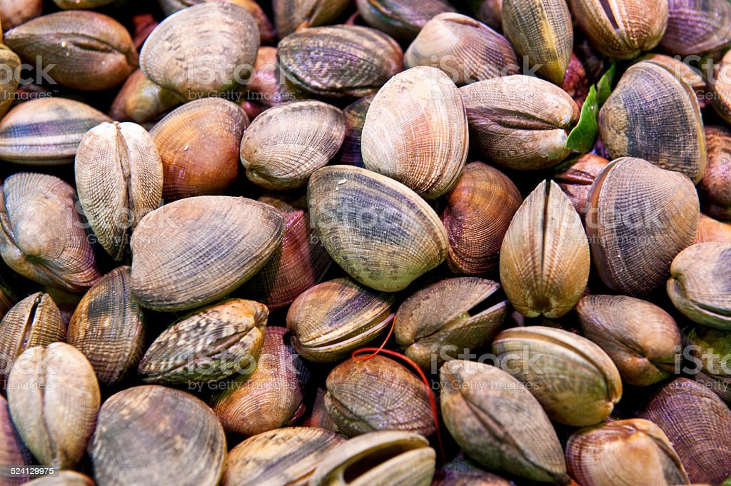 Fresh Clams for sale in a fish market stock photo