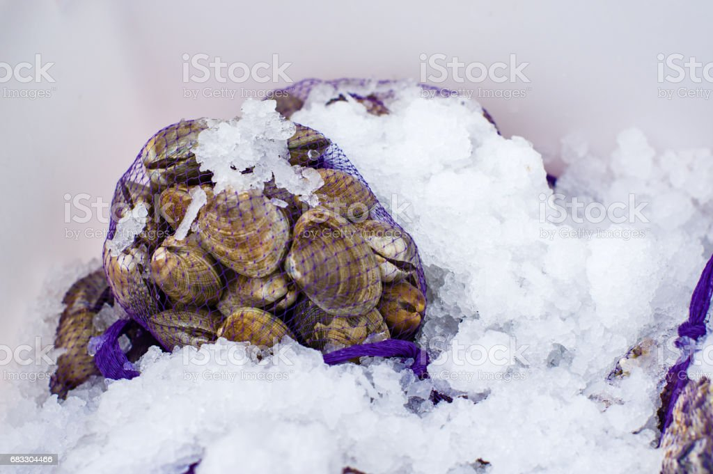Fresh clams on ice at the market foto stock royalty-free
