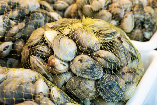 fresh clams on mesh bag - mięczak zdjęcia i obrazy z banku zdjęć