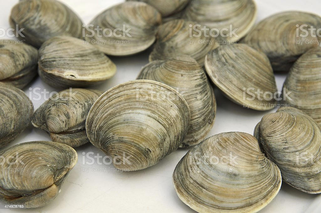 Fresh clams on white plate royalty-free stock photo