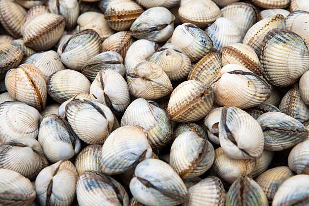 frische herzmuscheln (cerastoderma edule) auf einem fischmarkt - herzmuschel stock-fotos und bilder
