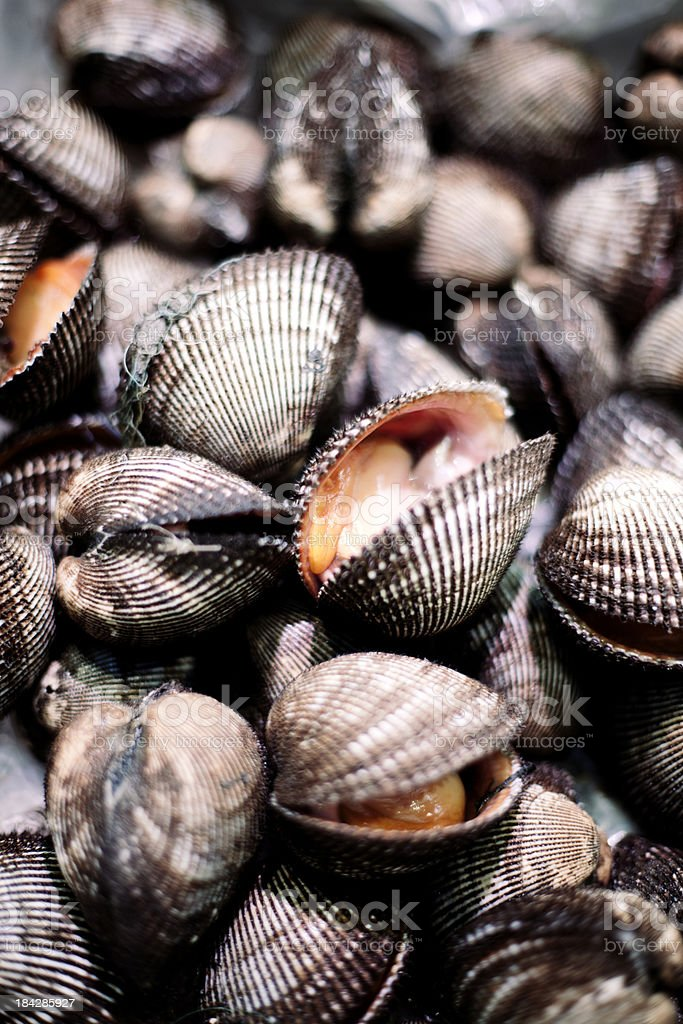 Fresh cockles stock photo